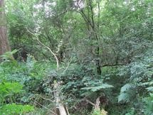 A research plot in Wytham Woods, near Oxford