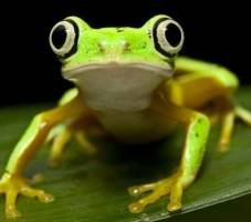 'Fingerprint' technique spots frog populations at risk from pollutio