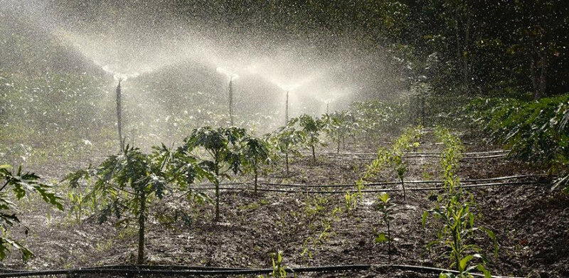 Crops being watered Credit: Philip Junior Male on Unsplash
