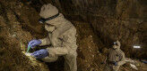 Stone Age bear genome reconstructed from DNA in Mexican cave